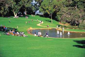 Picnic Area in Kings Park  (Photo Courtesy of Tourism WA)
