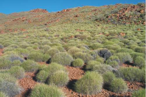 S12: Spinifex hummock grassland on rocky range habitat in central Australia, photograph by Catherine Nano.