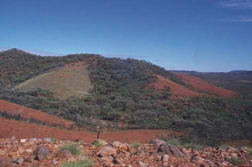 S19: Mulga-spinifex mosaic in central Australia, photograph by Catherine Nano.