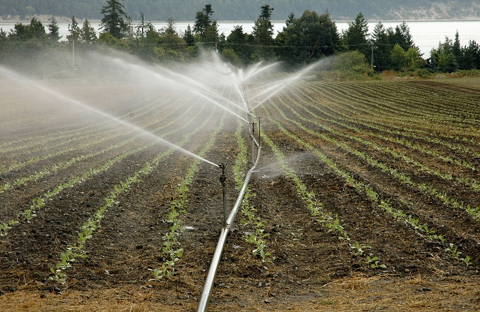 Image: Irrigated field